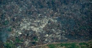 Πώς ο Αμαζόνιος έπαψε να είναι πνεύμονας της Γης