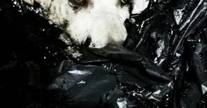 Κτηνωδία στην Κύπρο: Έλουσαν σκυλάκια με πίσσα και τα πέταξαν ζωντανά στα σκουπίδια