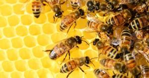Ιδιαίτερη προσοχή απαιτείται στους μελισσοκομικούς χειρισμούς λόγω καύσωνα
