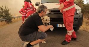 Φωτιά στη Βαρυμπόμπη: Μάχη για να διασωθούν όσα περισσότερα ζώα είναι δυνατό