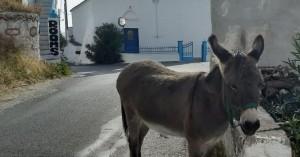 Φιλοζωική Κρήτης: Πρόγραμμα φροντίδας ιπποειδών