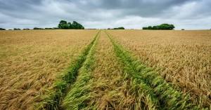 Στο 69,71% η απορρόφηση κονδυλίων από το Πρόγραμμα Αγροτικής Ανάπτυξης