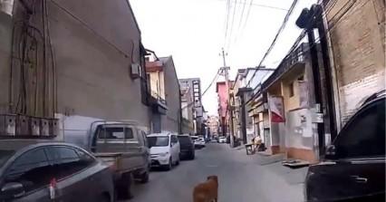 Συγκινητικό βίντεο: Σκύλος οδήγησε τους διασώστες στο λιπόθυμο αφεντικό του
