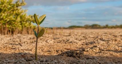 Ημερίδα στην Κίσσαμο: «Δικαίωμα και Ευθύνη για το Περιβάλλον»