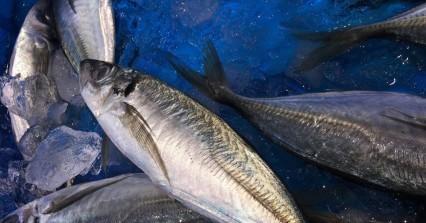 Αυστραλία: Αδιανόητος θάνατος για ψαρά - Τον χτύπησε σκουμπρί 18 κιλών στο στήθος