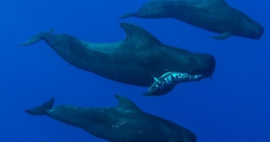 Τέσσερις γκρίζες φάλαινες ξεβράστηκαν νεκρές σε παραλίες του Kόλπου του Σαν Φρανσίσκο