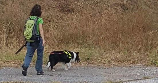 Φριχτός θάνατος για 26 σκυλιά από πολύ ισχυρό δηλητήριο στη Φλώρινα