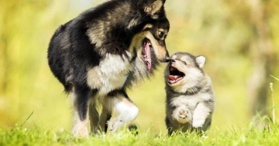 Η ορμόνη της αγάπης κάνει τους σκύλους ξεχωριστούς
