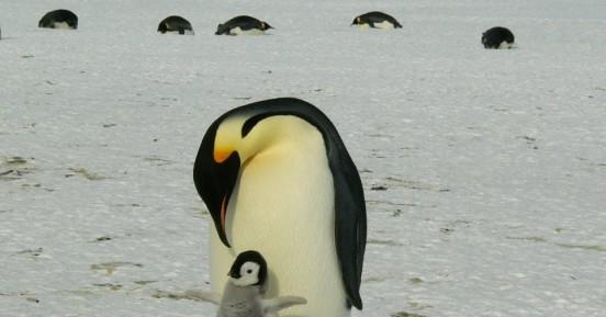 Δορυφόρος ανίχνευσε νέες αποικίες πιγκουίνων από τα...περιττώματα που αφήνουν στους πάγους