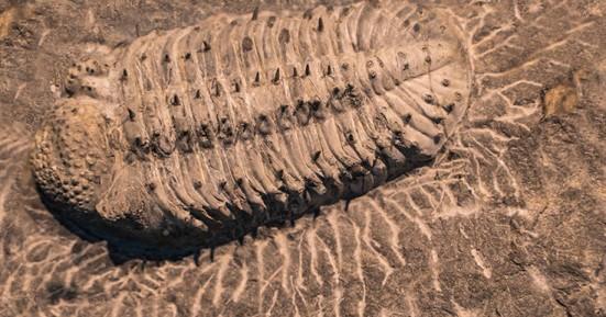 Το μυστηριώδες προϊστορικό πλάσμα που εξαφανίστηκε πριν από 250 εκατ. χρόνια