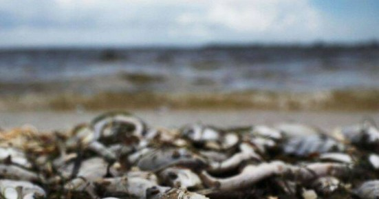 Σε τοξικά φύκια οφείλεται ο μαζικός θάνατος θαλάσσιων ζώων στην Χερσόνησο της Καμτσάτκα