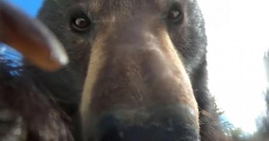 Αρκούδα βρήκε GoPro, την άνοιξε και τράβηξε βίντεο
