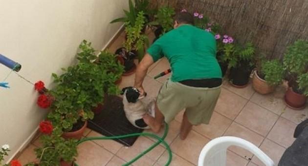 Ηράκλειο: Στο αυτόφωρο γιατί κακοποιούσε τον σκύλο του! (φωτό)