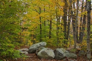 Αυτοψία στα δάση του Νομού Χανίων
