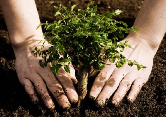 50 δέντρα και δεκάδες φυτά φυτεύονται στην πλατεία Κορνάρου