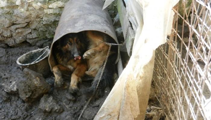 Εισαγγελική εντολή για αφαίρεση των ζώων του Xανιώτη παράνομου εκτροφέα