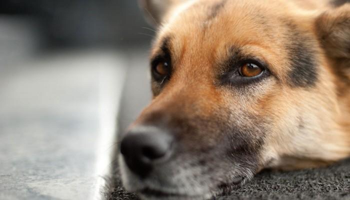 Σύσκεψη για τα αδέσποτα σκυλιά στα νοσοκομεία συγκαλεί ο Δήμος Ηρακλείου