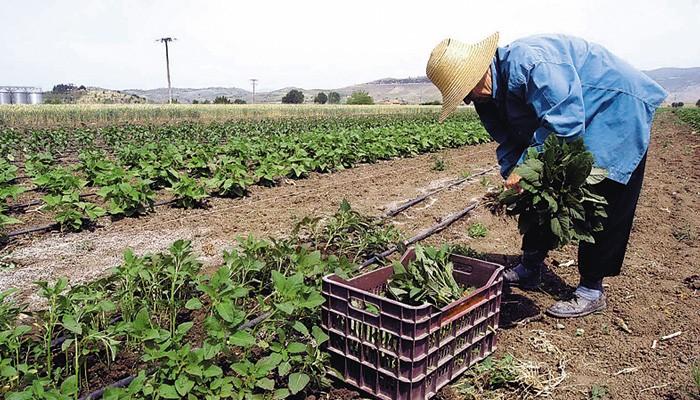 Τα δικαιολογητικά για τη χορήγηση βεβαίωσης Μητρώου Αγροτών