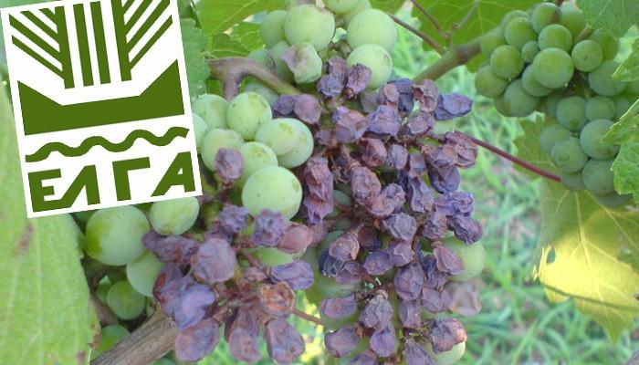Ρέθυμνο: Μέχρι τις 24/01 οι δηλώσεις για τις καλλιέργειες που επλήγησαν