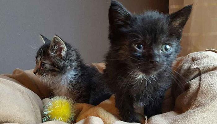 Οι Γάλλοι έχουν ως κατοικίδια περισσότερες γάτες από σκύλους