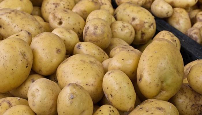 Προυποθέσεις για εξαγωγή πατάτας απο την Κρήτη