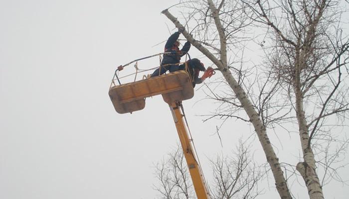 Κλάδεμα δέντρων στην οδό Χρυσοπηγής: Από τις 12 έως τις 14/1/2017