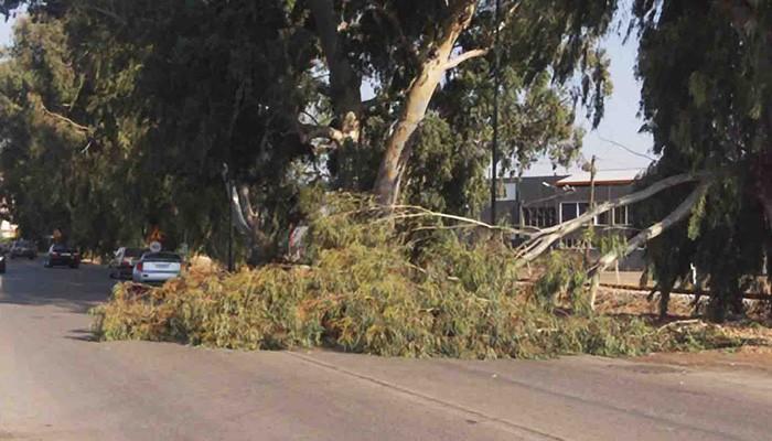 Τραυματίστηκε μαθητής στον Βάμο απο πτώση δέντρου