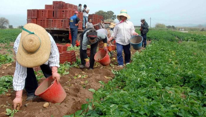 Μόλις οι 6 στους εκατό Ευρωπαίους αγρότες είναι κάτω των 35 ετών