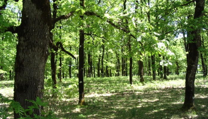 Οι θέσεις του ΤΕΕ Δυτ.Κρήτης για τους δασικούς χάρτες σε Χανιά και Ρέθυμνο