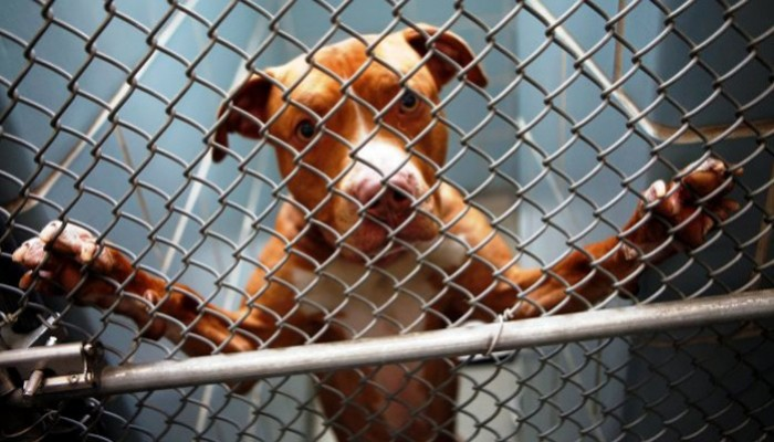 FBI: Βάση δεδομένων συνδέει την κακοποίηση ζώων με άλλα εγκλήματα