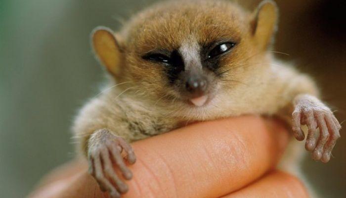 Τα 7 μικρότερα ζώα στον πλανήτη