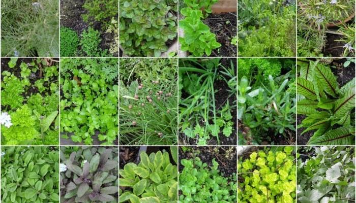 Σεμινάριο για φαρμακευτικά φυτά από Ιατρική σχολή Πανεπιστημίου Κρήτης
