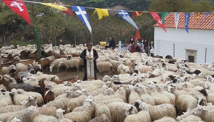 Αση Γωνιά: Ο Αι Γιώργης ο Γαλατάς και η ευλογία των αιγοπροβάτων