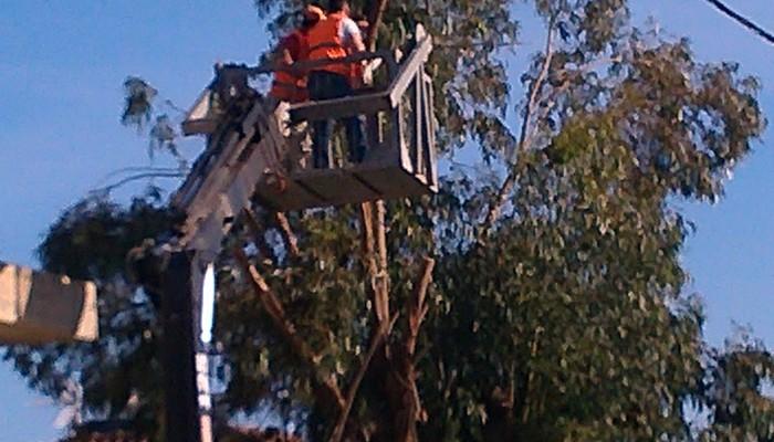 Κλάδεψαν δέντρα στις οδούς Κ. Χιωτάκη και Σφακίων
