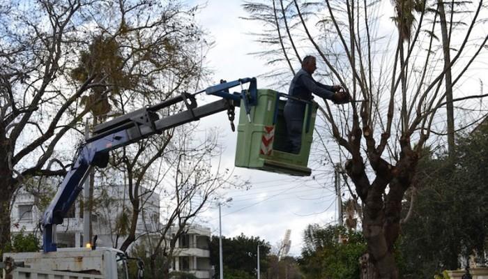Κλάδεμα δέντρων σε δρόμους της πόλης στα Χανιά