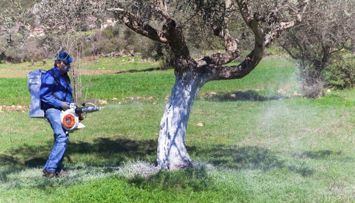 Από το υπουργείο ο διαγωνισμός προμήθειας των εντομοκτών για τη δακοκτονία
