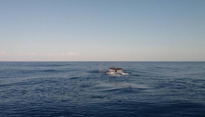 Κατέγραψε σε βίντεο φάλαινες ανοιχτά της Γαύδου