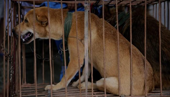 Συνελήφθη 66χρονος που πουλούσε ζώα σε αλλοδαπούς!