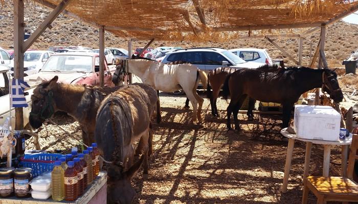 Σε πολύ καλή κατάσταση τα άλογα και τα γαιδουράκια του Μπάλου