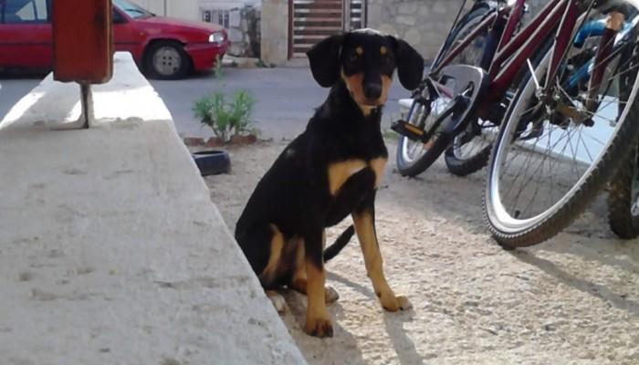 Αστυνομική Διαταγή για τις κακοποιήσεις ζώων στην Κρήτη