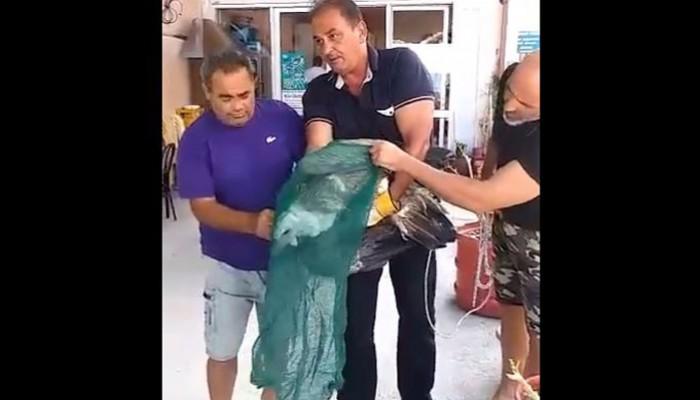 Ο γύπας που βρέθηκε στα βράχια της θάλασσας πάει σε ασφαλή χέρια (video)