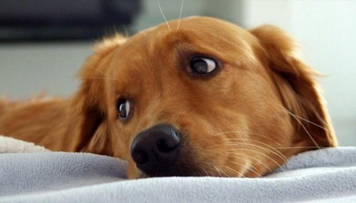 Χανιά: Πρόγραμμα στειρώσεων αδέσποτων ζώων συντροφιάς