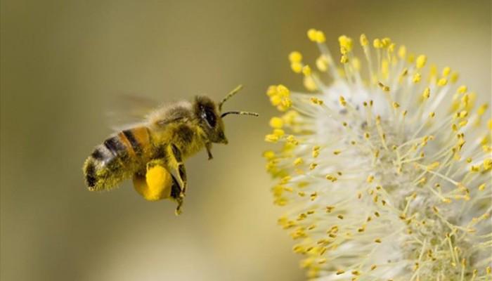 Ανοιξιάτικοι ψεκασμοί για τις μέλισσες
