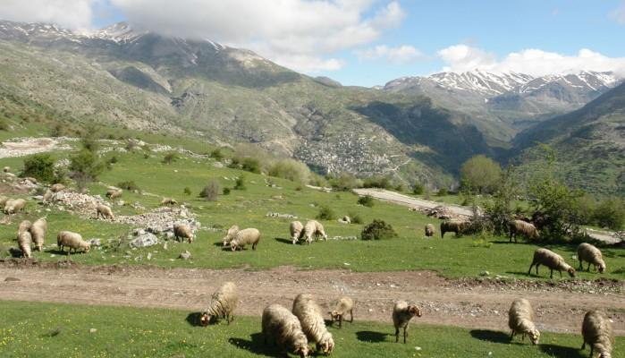 Δήμος Κισσάμου: Πληρωμή μισθώματος βοσκότοπων 2016 και 2017