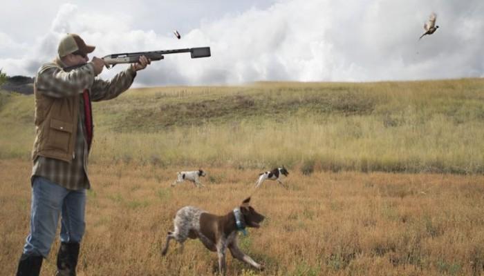 Σεμινάριο για τις πρώτες βοήθειες σε κυνηγετικούς σκύλους