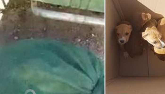 Βρέθηκαν 9 κουταβάκια μέσα σε σακούλα σκουπιδιών στο Ηράκλειο (βίντεο-φωτό)