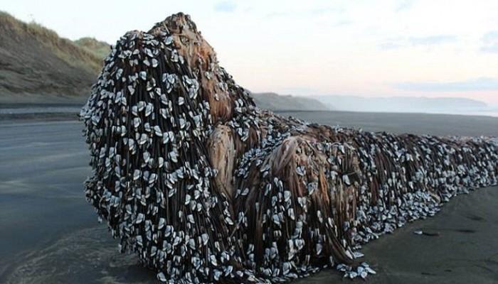 Μυστήριο με αντικείμενο που ξεβράστηκε σε ακτή της Νέας Ζηλανδίας