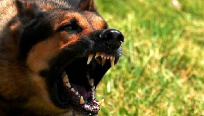 Σοκ στην Καλαμάτα! Στο νοσοκομείο 49χρονη από επίθεση σκυλιών