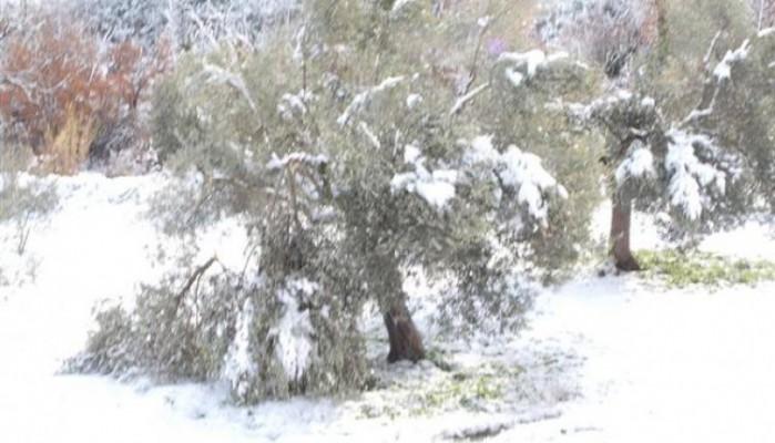 Δηλώσεις ζημιάς από τη χιονόπτωση και τον παγετό στο Δήμο Μινώα Πεδιάδας