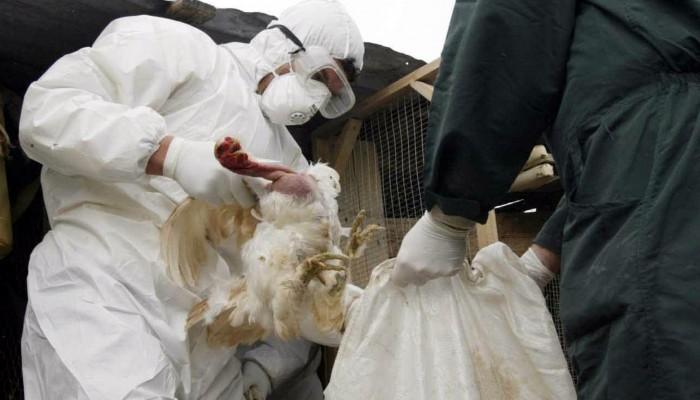 Μέτρα και στην Κρήτη μετά το κρούσμα γρίπης των πτηνών σε κύκνο στον Έβρο